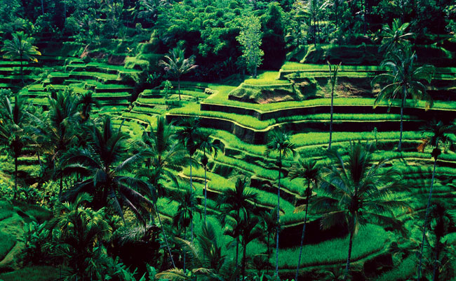 Ubud Highlight Tour